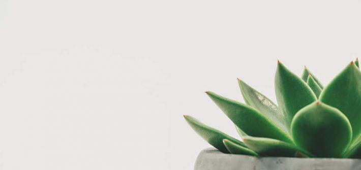 planta que representa los beneficios del minimalismo